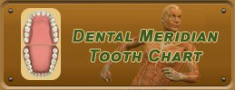 Dentist Richmond - Dental Meridian Tooth Chart